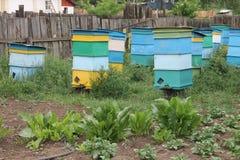 Bienenhaus mit bunten Bienenstöcken Stockfotografie
