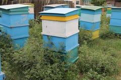 Bienenhaus mit bunten Bienenstöcken Lizenzfreie Stockbilder