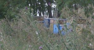 Bienenhaus und Gras stock video
