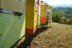 Bienenhausimker, frischer Honig in den Bergen am köstlichsten Stockfotografie