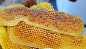 Bienenhonig-API melifera rodopica Makrobild lizenzfreies stockfoto