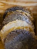 Bienenhonig und natürliches Wachs lizenzfreies stockbild