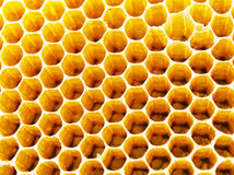 Bienenhonigzellen Stockfoto