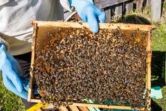 Bienenrahmen mit Bienenwabe und Bienen Stockfoto