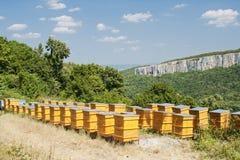 Bienenstöcke Stockfoto
