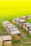 Bienenstöcke Stockfotografie