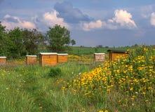 Bienenstöcke Lizenzfreies Stockfoto