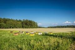Bienenstöcke auf ökologischem Feld Stockfotos