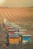 Bienenstöcke auf dem Sonnenblumenfeld in Provence, Frankreich Lizenzfreie Stockbilder