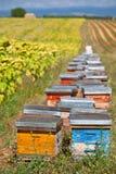 Bienenstöcke auf dem Sonnenblumenfeld in Provence, Frankreich Stockfotografie