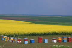 Bienenstöcke auf Rapsfeld Lizenzfreie Stockfotografie