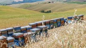 Bienenstöcke in der toskanischen Landschaft Lizenzfreie Stockfotografie
