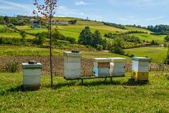 Bienenstöcke in der Wiese Lizenzfreies Stockfoto