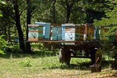 Bienenstöcke im Anhänger Lizenzfreies Stockbild