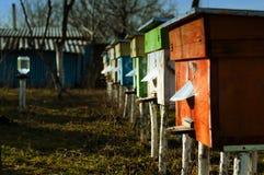 Bienenstöcke im Bienenhaus Stockfoto