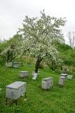 Bienenstöcke im geblühten Garten Stockfotos