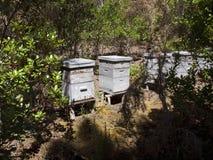 Bienenstöcke im Wald Stockbild