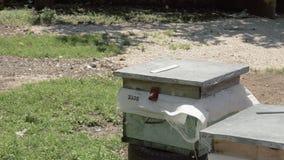 Bienenstöcke von Bienen im Bienenhaus, Georgia stock video