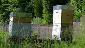 Bienenst?cke in einem Garten stock video footage
