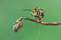 Bienenstandplatz auf Steuerknüppel Stockfotos