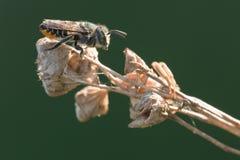 Bienenstandplatz auf Steuerknüppel Stockfotografie
