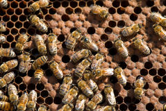 Bienenstock Lizenzfreie Stockfotos