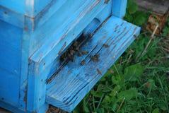 Bienenstock Lizenzfreie Stockbilder