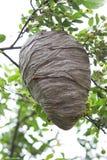Bienenstock stockbilder