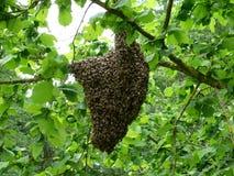 Bienenstock in den grünen Blättern Lizenzfreies Stockfoto