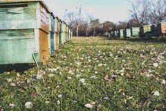 Bienenstock in einem Garten stockfotos