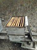 Bienenstock gemacht vom Holz Stockbild