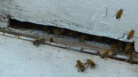 Bienenstock Honey Home für Bienen stock footage