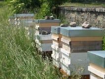 Bienenstock im tiefen Gras Lizenzfreie Stockbilder