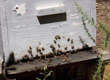 Bienenstock im Wald Lizenzfreies Stockfoto