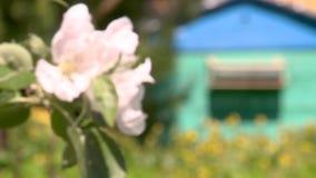Bienenstock mit Bienen im Bienenhaus stock video