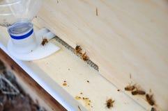 Bienenstock mit Eingangszufuhr Stockfotografie