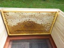 Bienenstock mit Rahmen Lizenzfreies Stockfoto