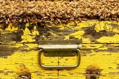 Bienenstock, Tragegriffbienenstock Stockfotografie