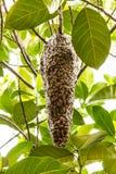 Bienenstock von Bienen Lizenzfreies Stockbild