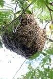 Bienenstock zu Hause Lizenzfreies Stockbild