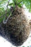 Bienenstock zu Hause Lizenzfreie Stockfotos
