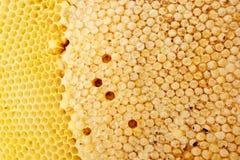 Bienenstockbeschaffenheit Lizenzfreie Stockbilder