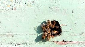 Bienenstockeingang stock video