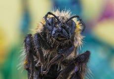 Bienensupermakro Stockfotos