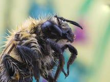 Bienensupermakro Lizenzfreie Stockfotografie