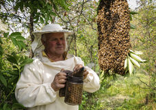 Bienenwächter mit einem Schwarm von Bienen Stockfotos