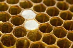 Bienenwabe 008 Stockfotos