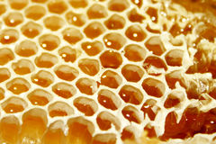 Bienenwabe stockfotografie