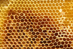 Bienenwabe Lizenzfreies Stockfoto