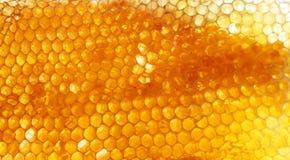 Bienenwabe Stockfoto
